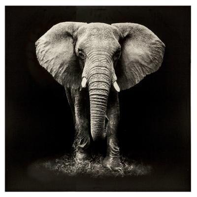 DEKORACIJE SLIKA ELEPHANT 100X100 picture